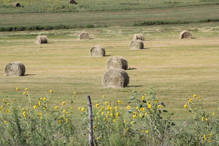 Hay should be analyzed for nutrient content. Photo courtesy of Troy Walz.