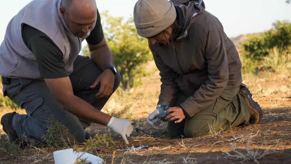 Andrei Snyman and Audra McCaslin working on casting a track of a lion footprint. (Photo courtesy Jazmin Castillo)