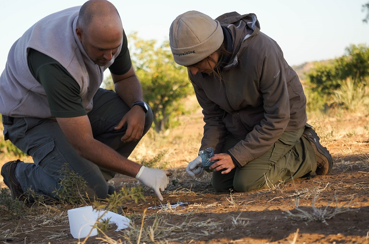 Andrei Snyman and Audra McCaslin work on casting a track of a lion footprint during the UNL study abroad trip to Botswana. (Photo by Jazmin Castillo)
