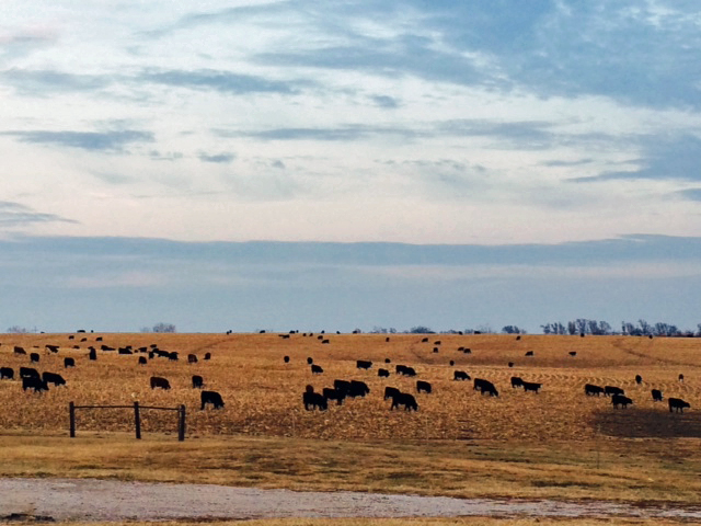 The Three-State Beef Conference is designed to give beef cattle producers and others in the beef industry a regular update on current cow-calf and stocker topics.  Photo courtesy of Lindsay Chichester, Nebraska Extension.