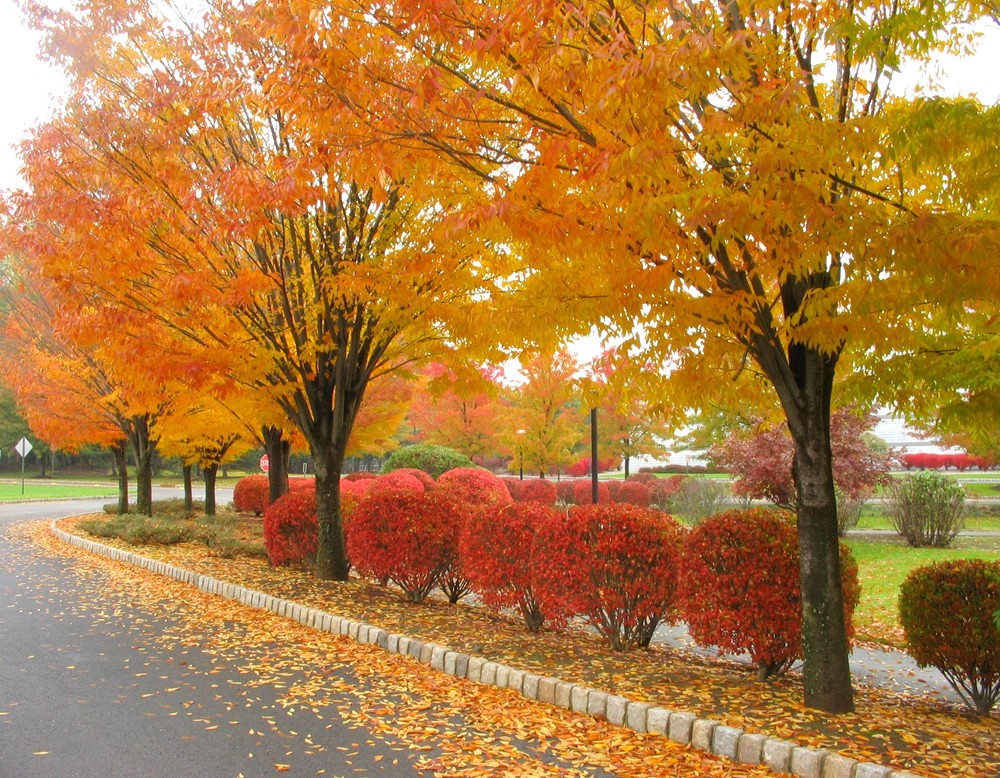 Autumn-Leaves-Wallpapers.jpg