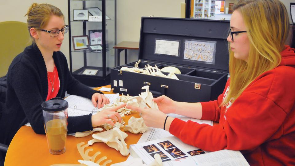 Pre-nursing students (from left) Megan Drozda and Ellen Cook study the human skeletal system using a kit checked out from Love Library. (Troy Fedderson | University Communications)