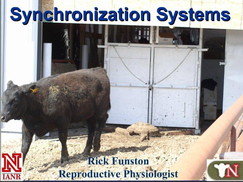 Estrus Synchronization in Heifers and Cows Webinar.