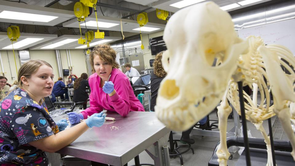 UNL students (from left) Courtney Schiller and Sara Santin discuss a dog skeleton during a veterinary anatomy course held in the fall semester. (Craig Chandler   University Communications)