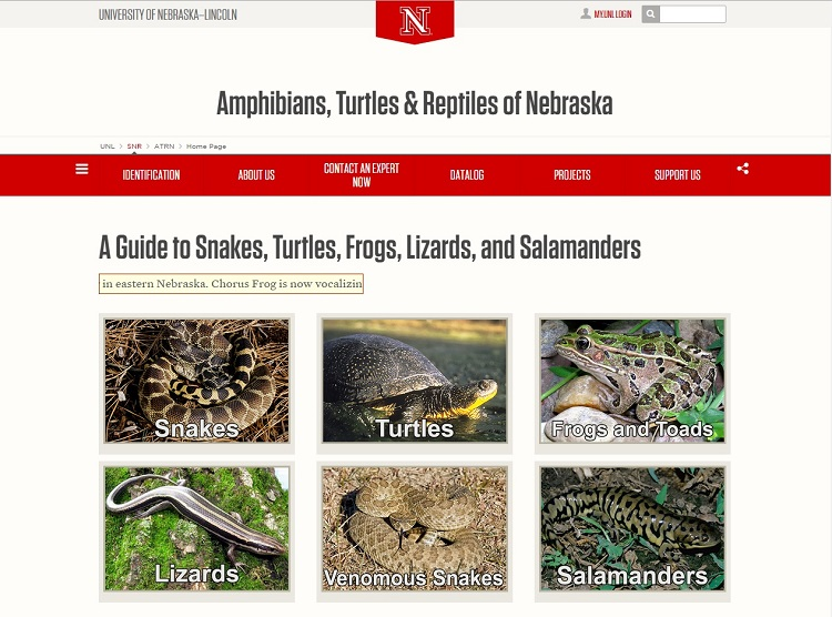 """The """"Amphibians, Turtles & Reptiles of Nebraska"""" website is managed by Dennis Ferraro and his team at UNL's School of Natural Resources."""