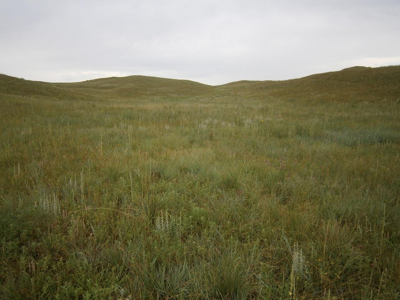 Photo-monitoring uses photographs to capture data about pastures.  Photo courtesy of Bethany Johnston.