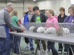 The 4-H Spring Rabbit Show is a great opportunity for youth to talk to other 4-H'ers about where to purchase a good rabbit for a 4-H project!