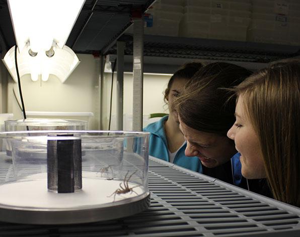 Spider Lab in Manter Hall