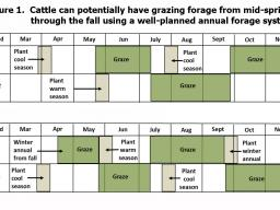 Cattle can be grazed from mid-spring through the fall using an annual forage system.