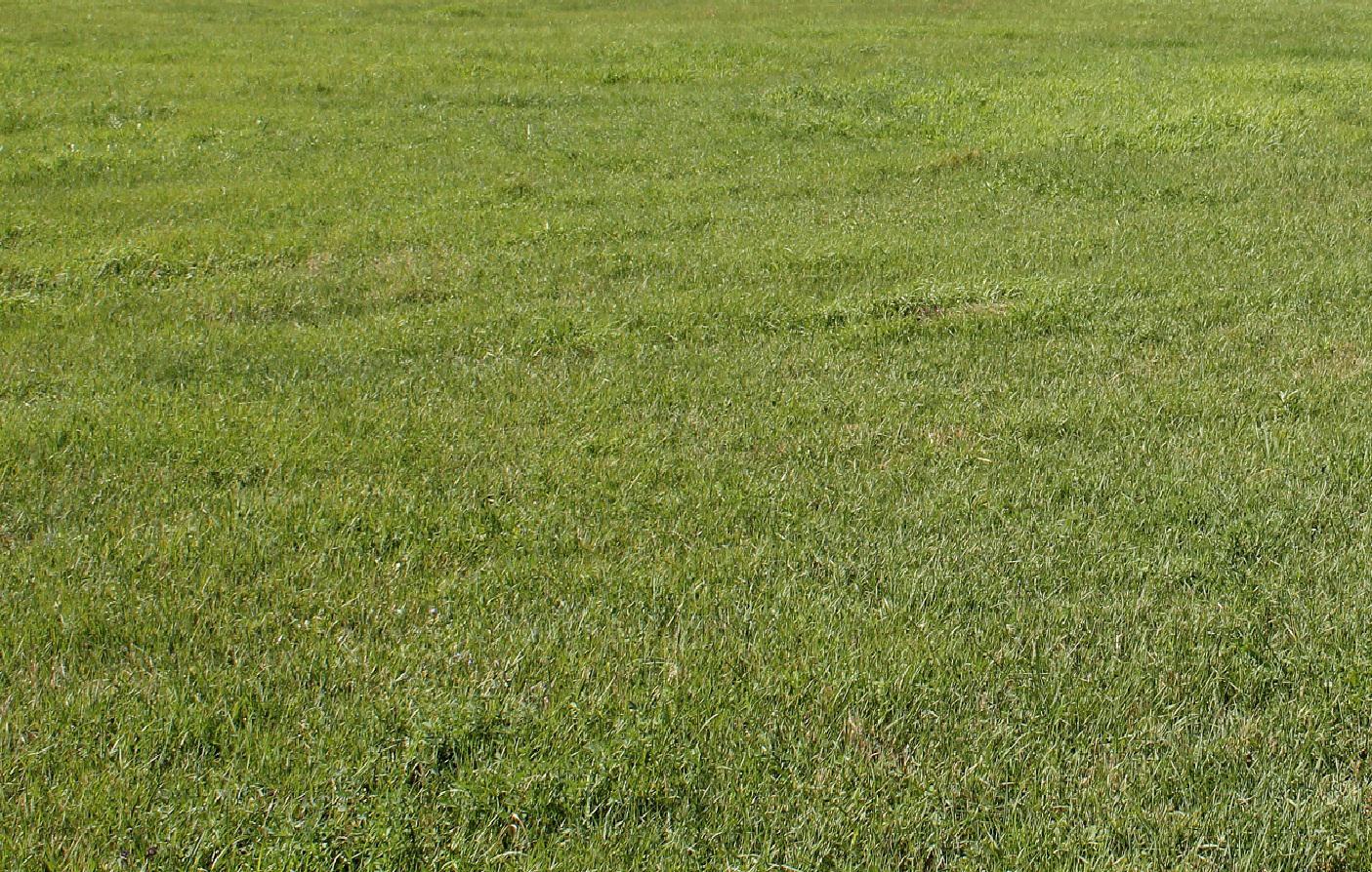 Hay meadows respond well to fertilizer.  Photo courtesy of Troy Walz.