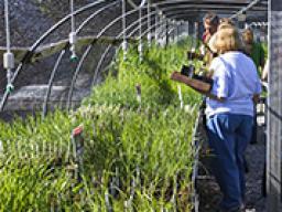 Annual Arboretum plant sale is set for Saturday.