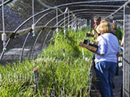 Arboretum plant sales for Fridays through June 17 at the East Campus greenhouse.
