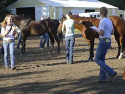 The horse judging contest may consist of four classes of four horses, two halter and two performance, to be judged by 4-H members in the elementary, junior and senior age divisions.