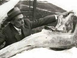 """University of Nebraska paleontologist E.H. Barbour informally measures a gomphothere specimen. This photo will be part of the exhibition """"Lost World of E.H. Barbour: Renaissance Man on the Plains,"""" opening June 3 in Love Library South.  (Courtesy photo  """