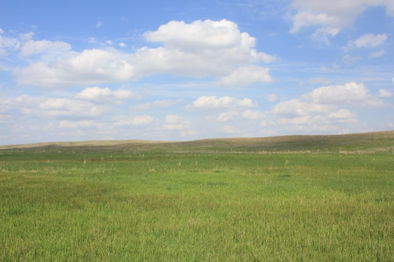 Beef production in many areas of Nebraska is contingent on rangelands that produce native vegetation.  Photo courtesy of Troy Walz.