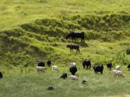 The Center for Grassland Studies' fall seminar series begins Aug. 29 and runs through Dec. 5. The seminars, 3 to 4 p.m. most Mondays at the Nebraska East Union, are free and open to the public. | Craig Chandler, University Communications