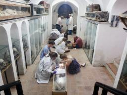 Students examine mummies in the crypt beneath the Convento dei Cappuccini e l'annessa Chiesa in Santa Lucia del Melo, Sicily.