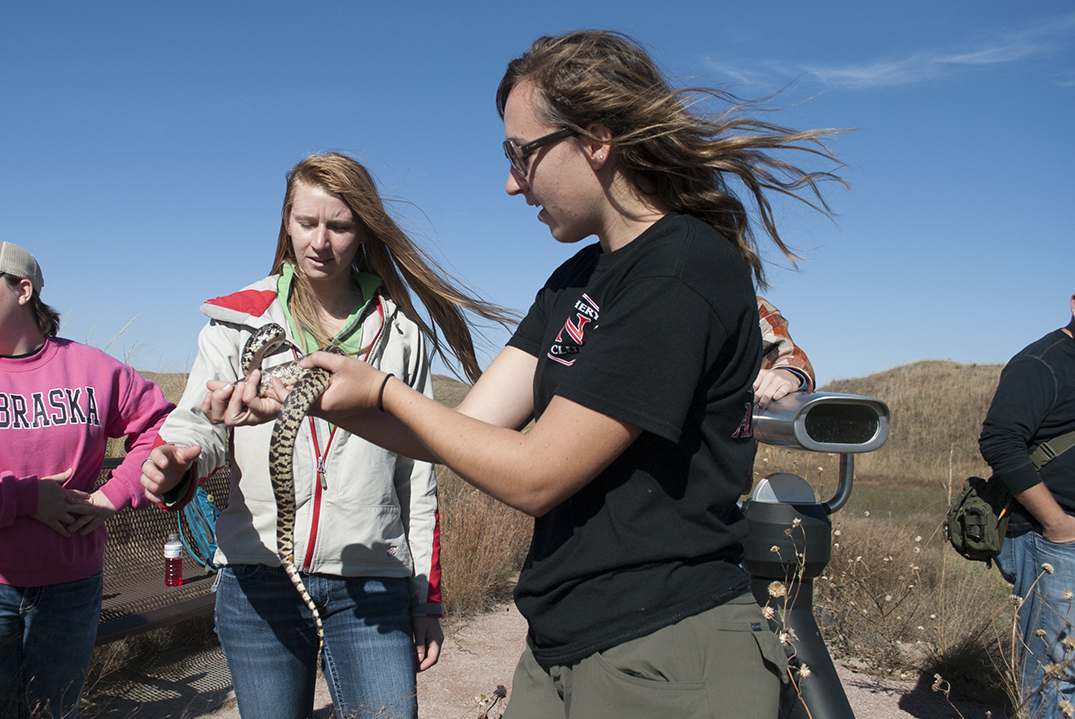 Ellen Dolph also Holds the Bull Snake who draws air into the mouth Mimicking a Rattlesnakes Rattle.   Dakota Altman, SNR