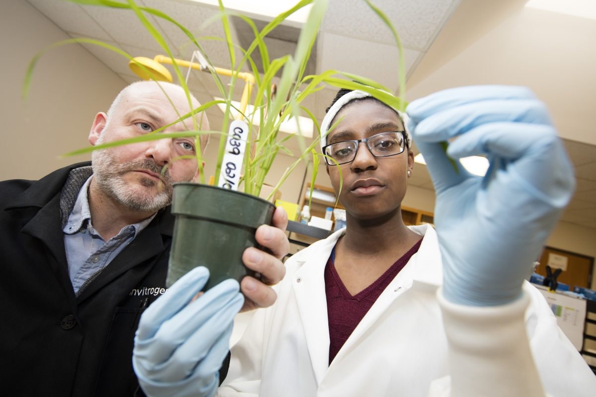 Harriet Appeah researches alongside Dr. Richard Wilson in plant pathology.