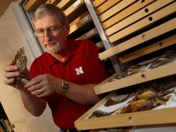 Robert Zink examines a bird specimen in the collections of the University of Nebraska State Museum. Zink, professor in the schools of natural resources and of biological sciences and curator of zoology, is co-author of a paper showing that zoologists have