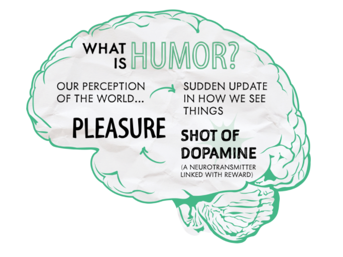 The effects of laughter on the human brain. (Courtesy of Student Health 101)