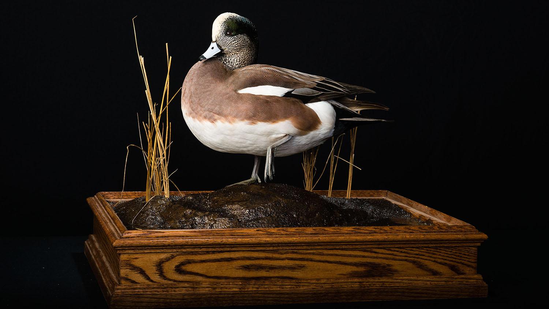 Photo by Michael Forsberg, conservation photographer, and Eric Fowler, of NebraskaLAND magazine.