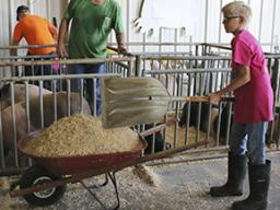The Pick-A-Pig 4-H club is a great opportunity to experience showing a livestock animal at the Lancaster County Super Fair.