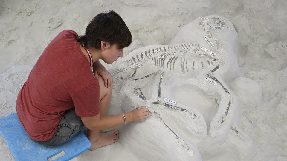 Paleontology intern Mikayla Struble works on a Pseudhipparion fossil at Ashfall Fossil Beds State Historical Park in 2016. | Courtesy image