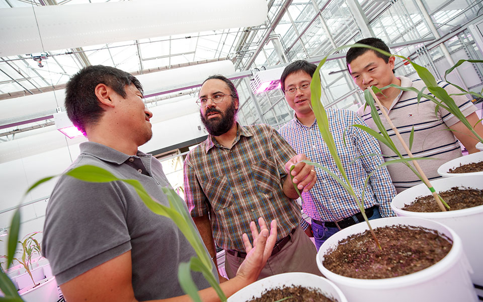 Harkamal Walia (second from left) discusses an experimental plan for the grant at the High Throughput Phenotyping facility at the Greenhouse Innovation Center on Nebraska Innovation Campus. From left is Toshihiro Obata, Hongfeng Yu and Qi Zhang. Not pictu