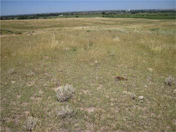 Pasture Rangeland and Forage Insurance is a risk management tool.  Photo courtesy of Aaron Berger.