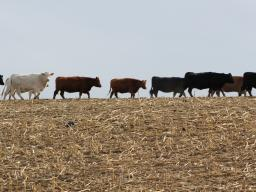 The primary objective of this exchange is to assist in the development of farmer-cattlemen relationships.  Photo courtesy of Troy Walz.