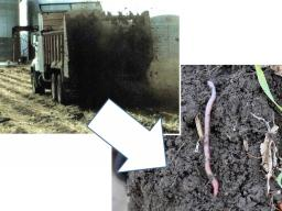 Manure improves soil physical properties such as soil aggregate formation. Photo courtesy of USDA NRCS Soil Health flickr collection.
