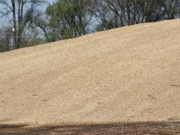 If silage is not correctly packed into a bunker (or bagged or put in silos), then oxygen will remain in the pile which leads to greater shrink losses. Photo courtesy of Troy Walz.