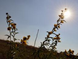 Nine-Mile Prairie | Natural Resources