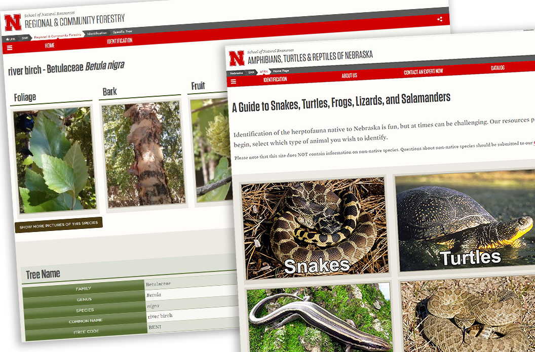 The herpetology and tree websites at SNR are designed to make information easily available to the public.