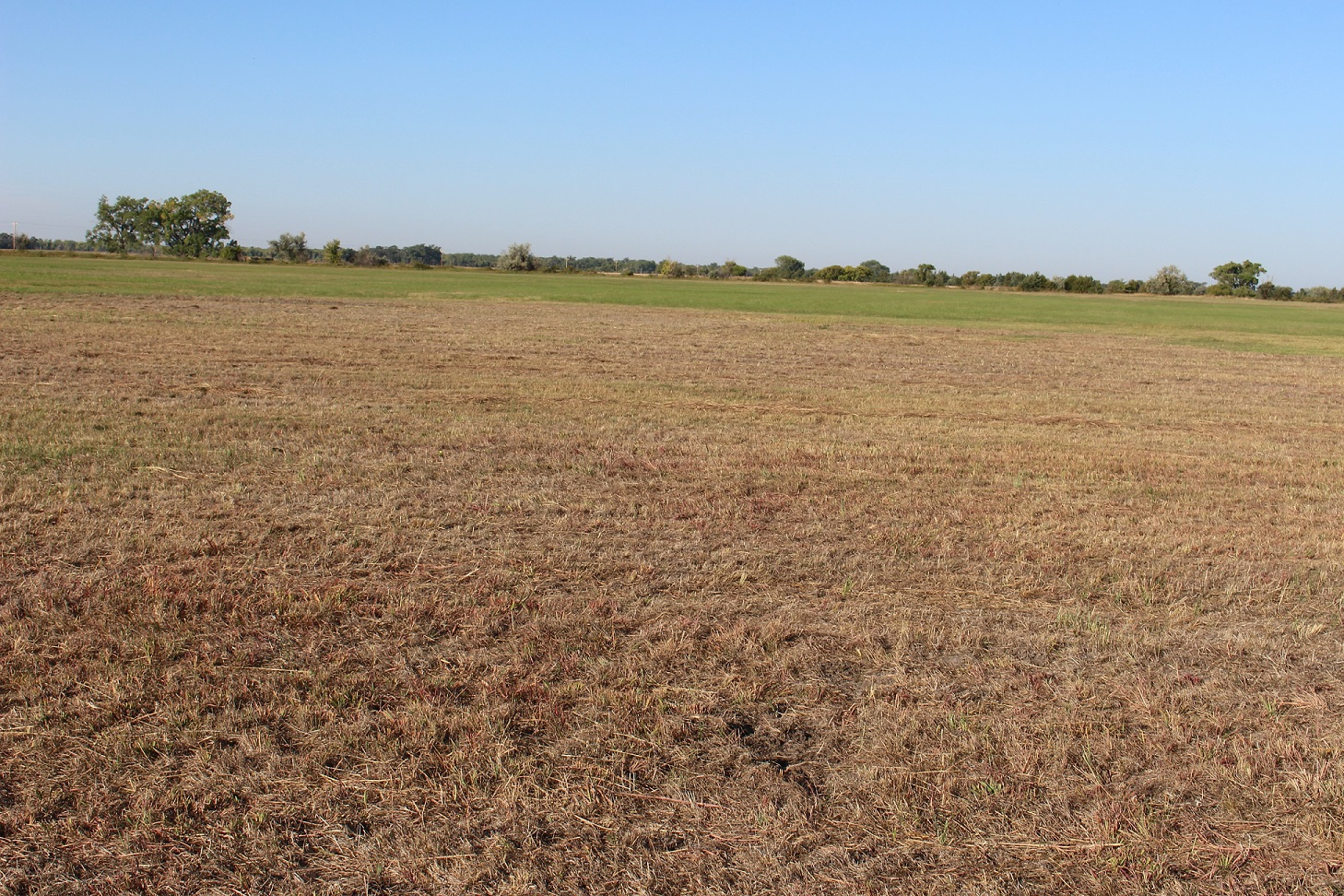 An area of subirrigated meadow in Lincoln County damaged from the feeding of grubs.  Photo courtesy of Jerry Volesky.