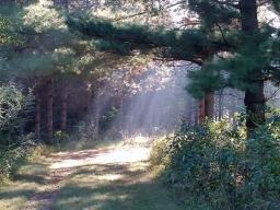 Prairie Pines Arboretum Trail
