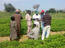 Researchers from Niger are doing an in-field assessment of the soil at one of their on-farm trial sites testing the sand content, soil pH, and electrical conductivity and depth. Charles Wortmann  |  University of Nebraska–Lincoln Agronomy and Horticulture