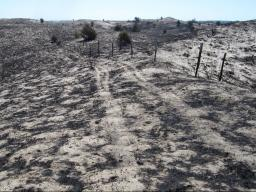 Sandhills grasslands are reduced to ash, days after a wildfire swept through the Niobrara Valley Preserve in July 2012.  |  Chris Helzer, The Nature Conservancy