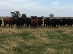 Knowing your production costs is a key step in making your operation more profitable.  Photo courtesy of Kristen Ulmer.
