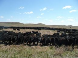 Seventeen Beef Workshops will be held in Eastern Nebraska.  Photo courtesy of Steve Niemeyer.