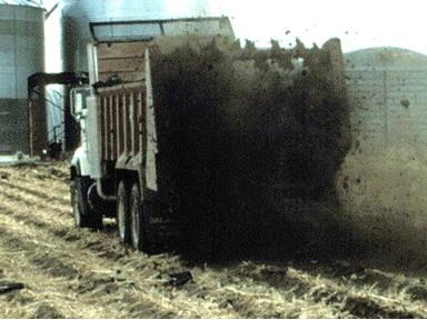 Economic value can also be gained from a yield response to manure. Photo courtesy of Rick Koelsch.