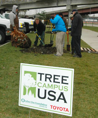 Volunteers and Landscape Services employees plant a tree north of Memorial Stadium during UNL's celebration of the Tree Campus USA designation in 2008.