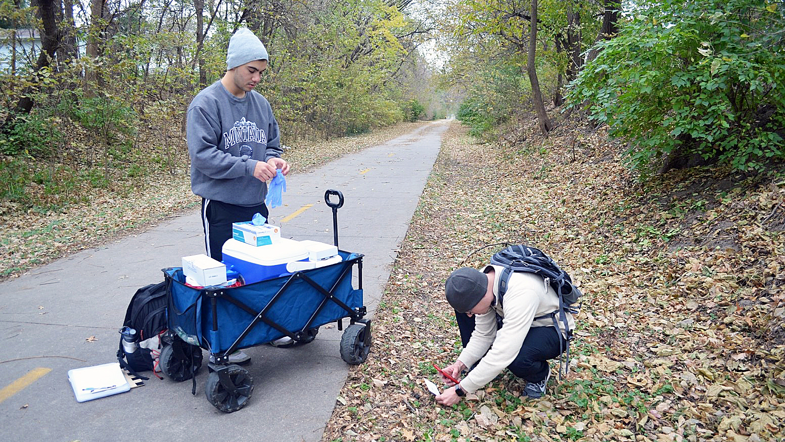 Fisheries and Wildlife student Mike True, left, assists graduate student Kyle Dougherty with red fox scat collection.   Courtesy image