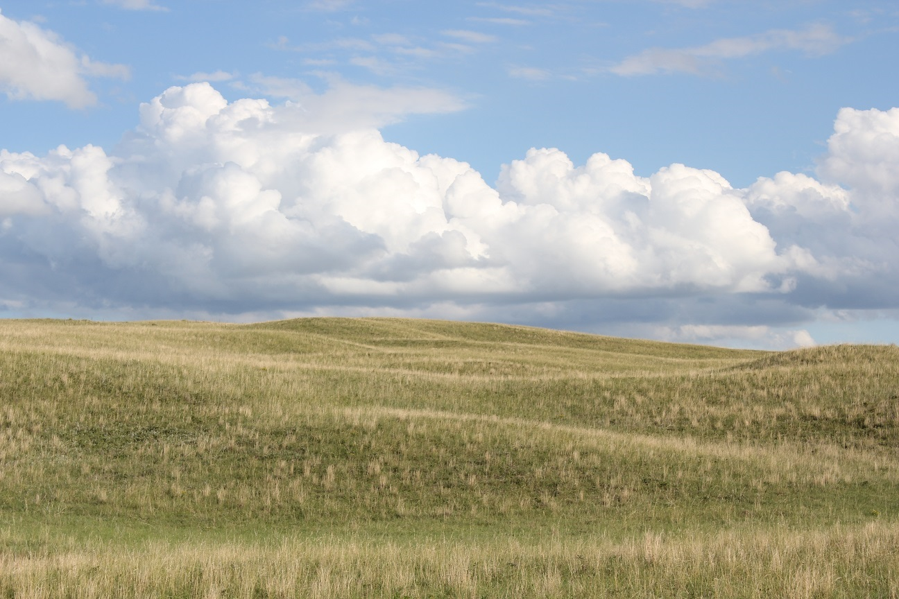A lot of rangeland in Nebraska is warm season dominate and is typically considered to provide on average 0.6 animal unit months (AUM) of grazing per acre. Photo courtesy of Troy Walz.