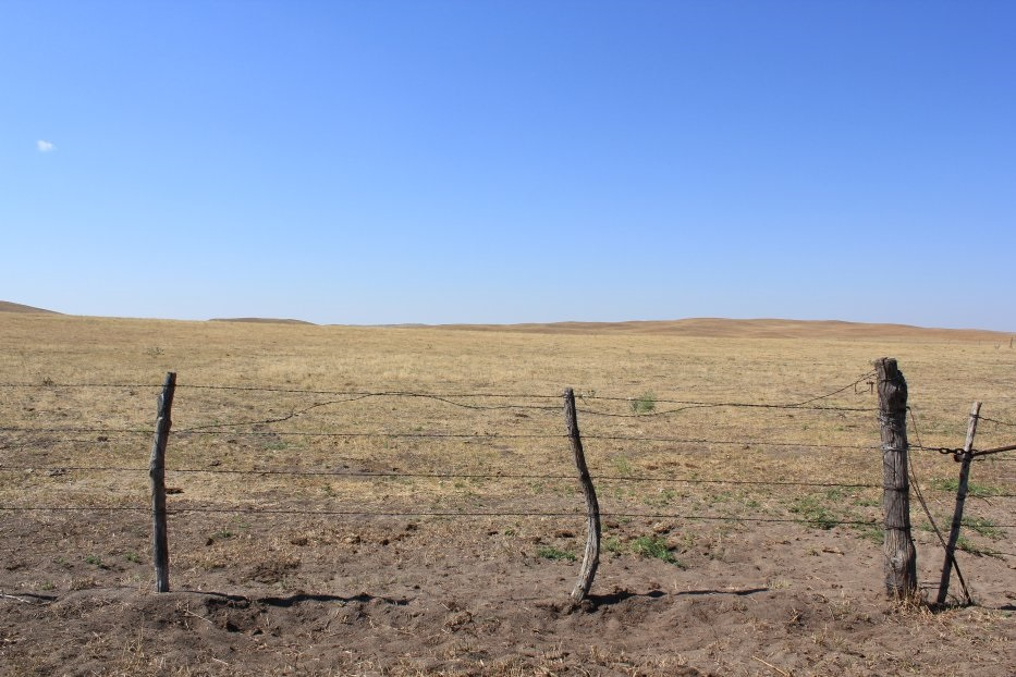 Who decides when drought has lowered pasture production low enough to remove the cattle?  Photo courtesy of Troy Walz.