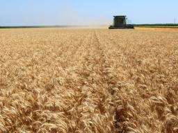 Wheat Harvest