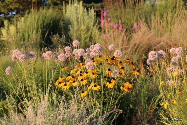 Brown-bag on Evolution of a GreatPlants Garden