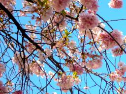 Spring Break: March 18-25, 2018