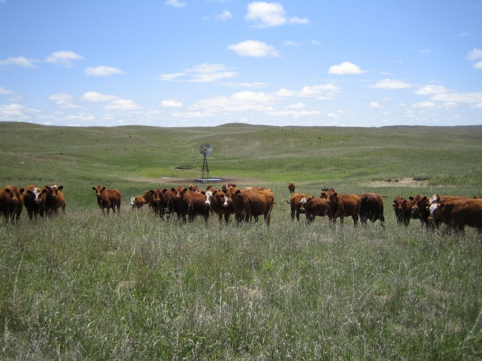 Planning for the upcoming grazing season is important and should include factors such as estimated stocking rates, time of grazing for specific pastures, as well as contingency plans in the event of dry conditions. Photo courtesy of Jerry Volesky.